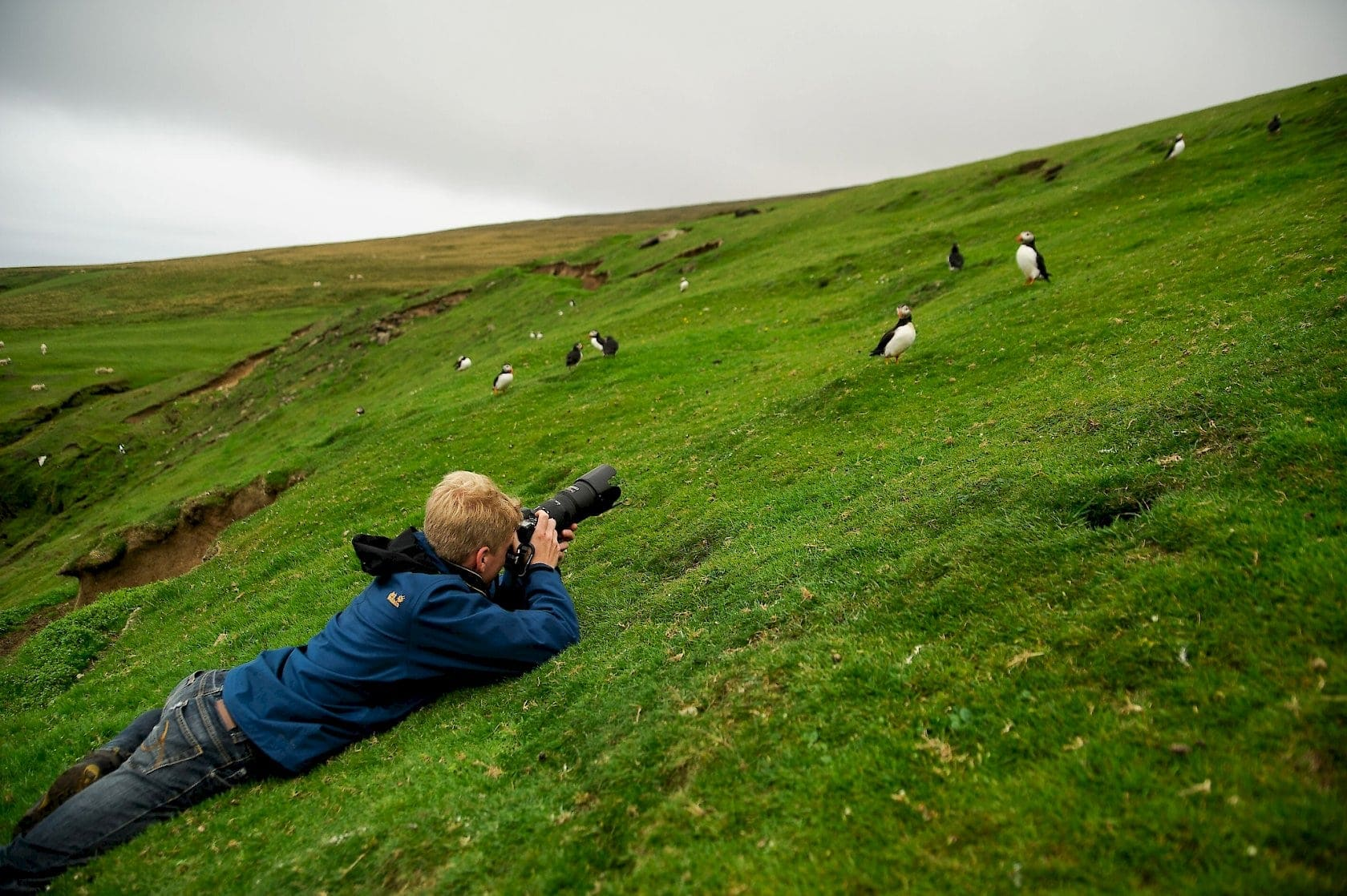 Image result for «BIRD WATCHING»