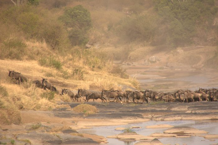 5 days Tsavo East / Amboseli / Masai Mara – Flight Ukunda