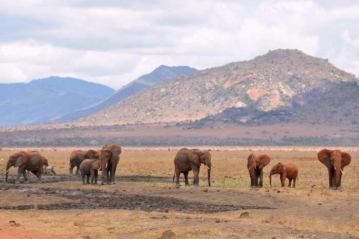 4 days Amboseli / Tsavo West / Tsavo East (3 nights)